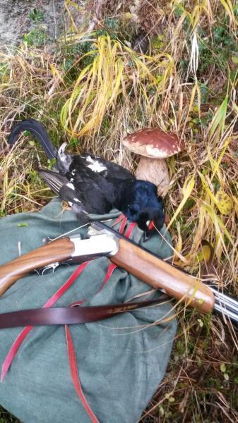 Revoca Porto d'armi uso caccia: il TAR di Trento annulla il provvedimento della Questura sul diniego.